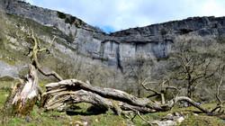 Malham Cove, Sleeping tree