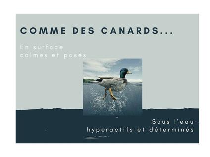 Newsletter: Des canards cités dans un canard (non enchainé)