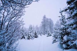 Snow shoeing in Norway