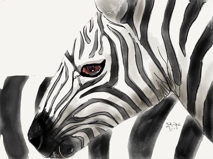 ANZ Studio Zebra