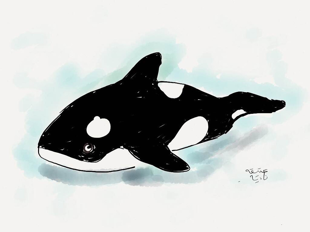 first painting of orca stuffed toy