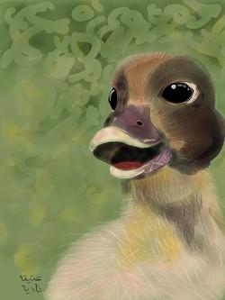 ANZ Studio Ducky