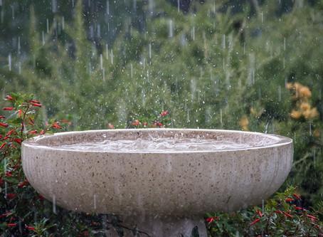Rainwater Harvesting at the Meraki Tiny House
