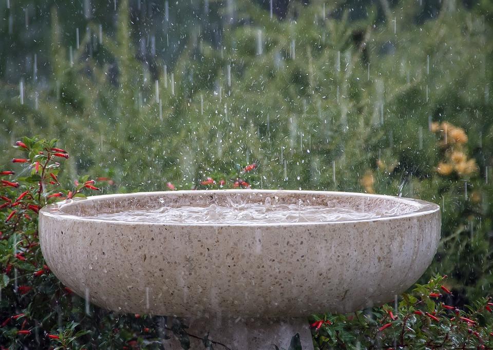 rainwater basin