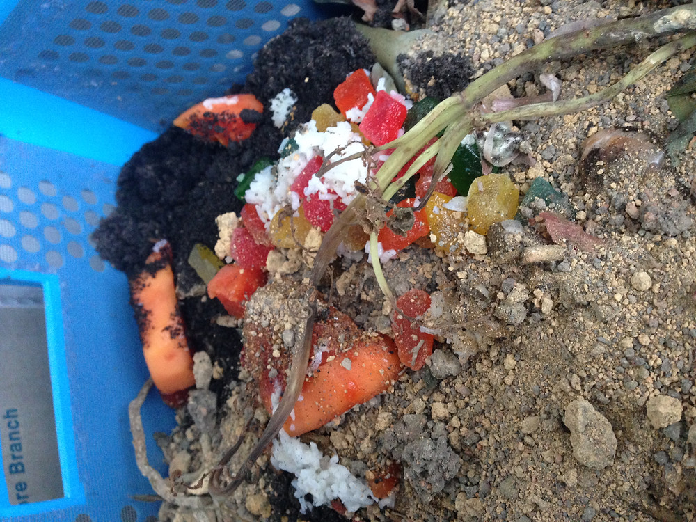 kitchen food waste in compost bin