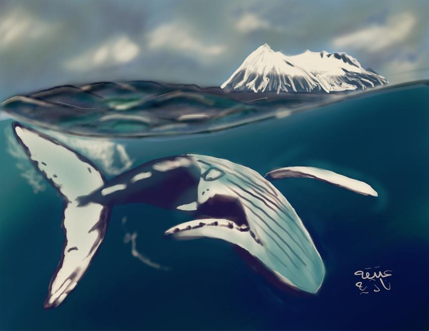 ANZ Studio Arctic Whale