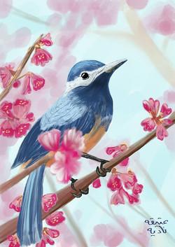ANZ Studio Blue Bird