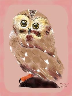 ANZ Studio Little Pygmy Owl