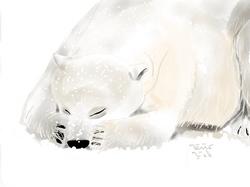 ANZ Studio Shy Polar Bear