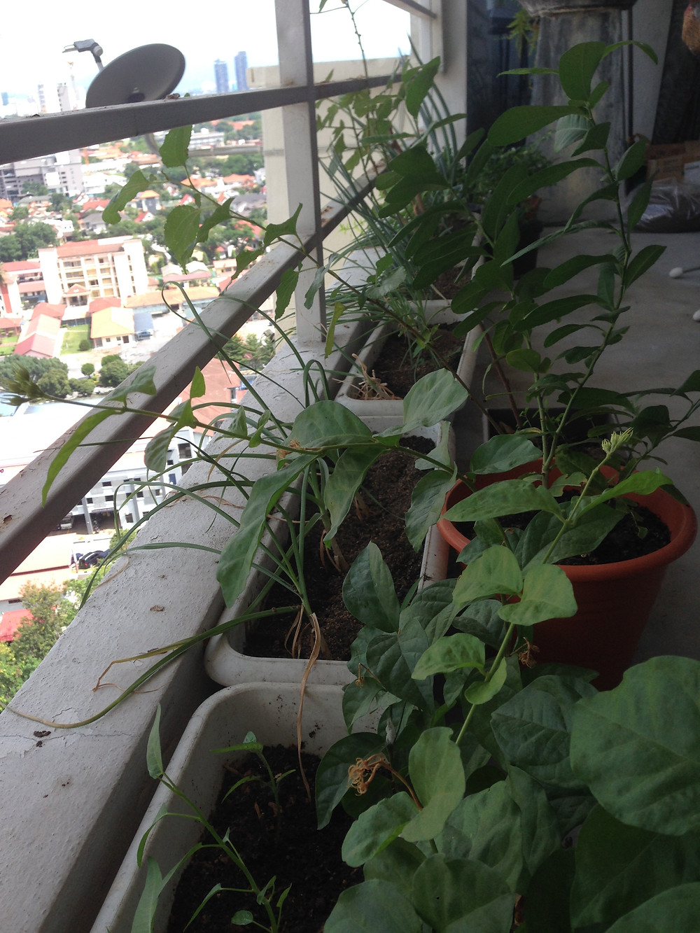 plants growing on balcony