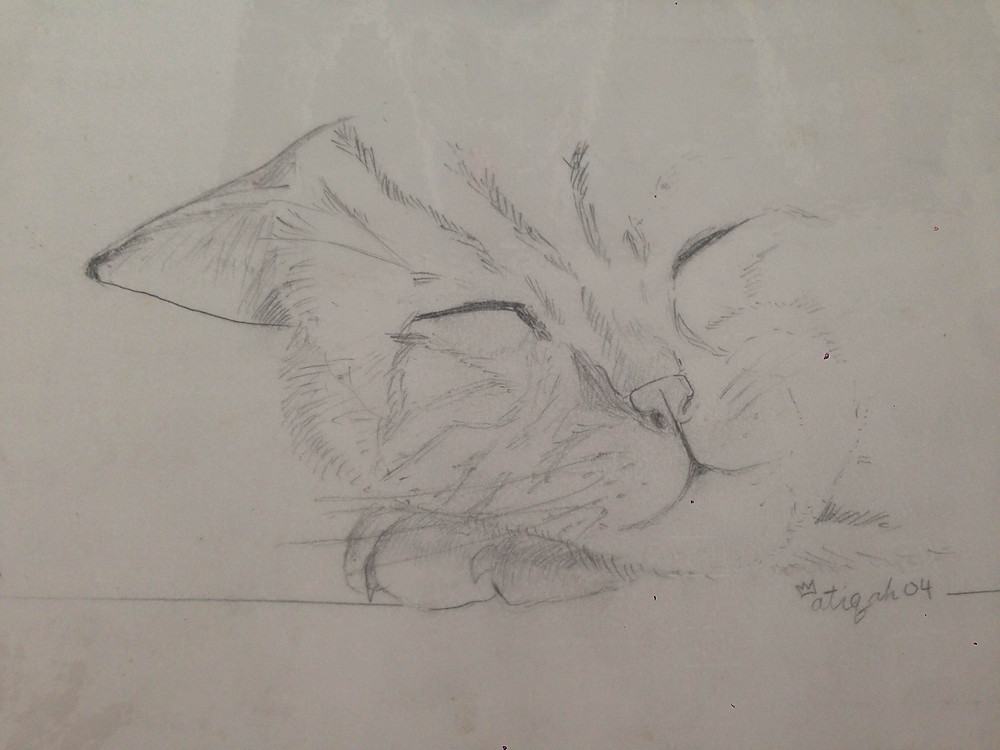 pet cat sketch