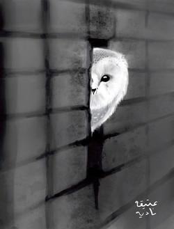 ANZ Studio Owl in a Wall