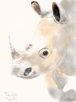 ANZ Studio White Rhino