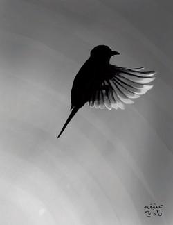 ANZ Studio Backlit Bird