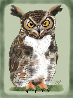 ANZ Studio Great Horned Owl