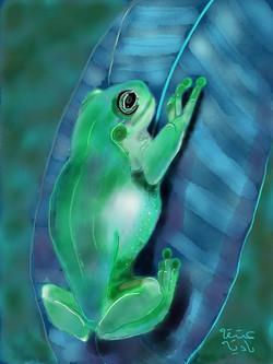 ANZ Studio Frog on a Leaf