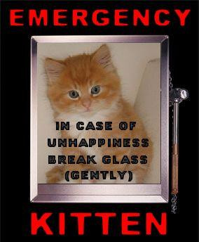 emergency kitten