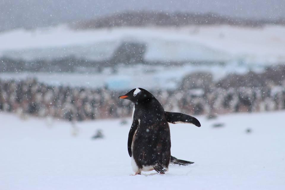 bye bye penguins