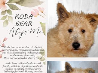 Adopt Koda Bear!