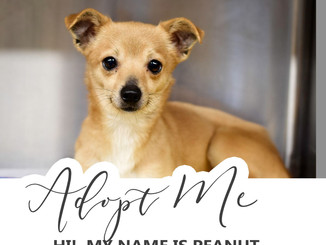 Adopt Peanut!