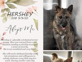 Adopt Hershey