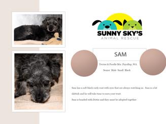 Adopt Sam