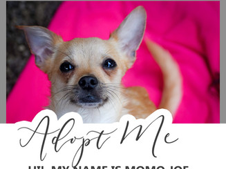Adopt Momo Joe