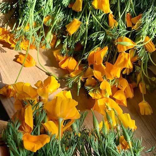 California Poppy Tincture