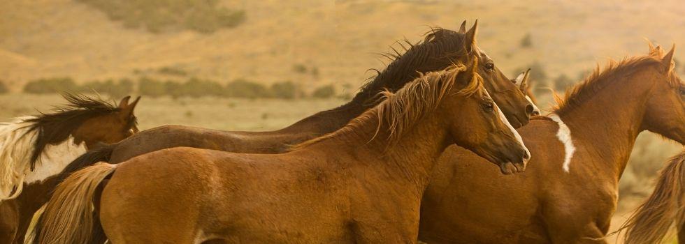 herd-horses-980x350.jpg