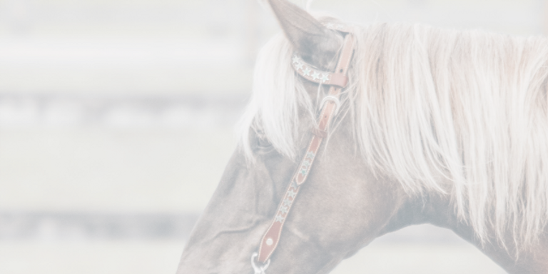 Shenandoah_horse-head-2_640x320.png
