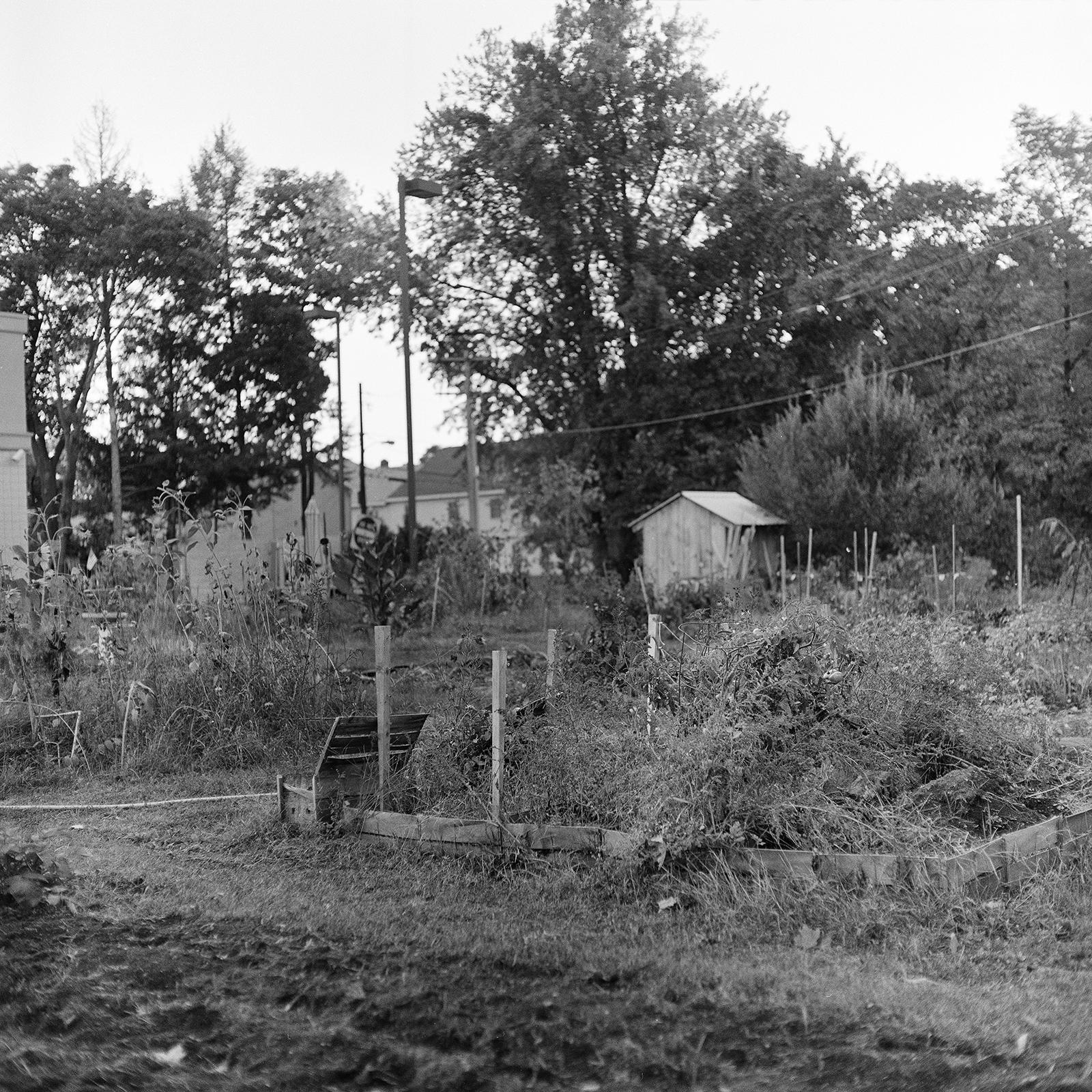 ZZOLL_Community Garden, 2016