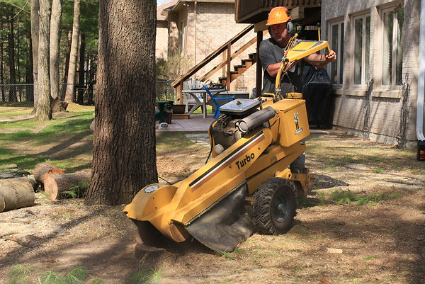 grinding a stump on golden meadow dr. city of barrie