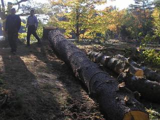 Wild rice bay, six mile lake tree removal