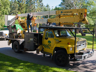 Spring is almost here, book DLG tree service for all your tree removal and tree trimming needs in th