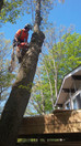 Spring Cottage tree removals. Book your tree service now for spring in the Georgian Bay area.