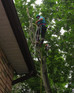 Tree removal service serving Barrie for over 30 years!