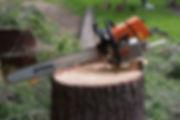 certified ontario arborist climbing a birch tree in oro medonte township.