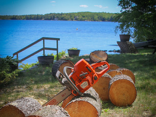 six mile lake tree removal