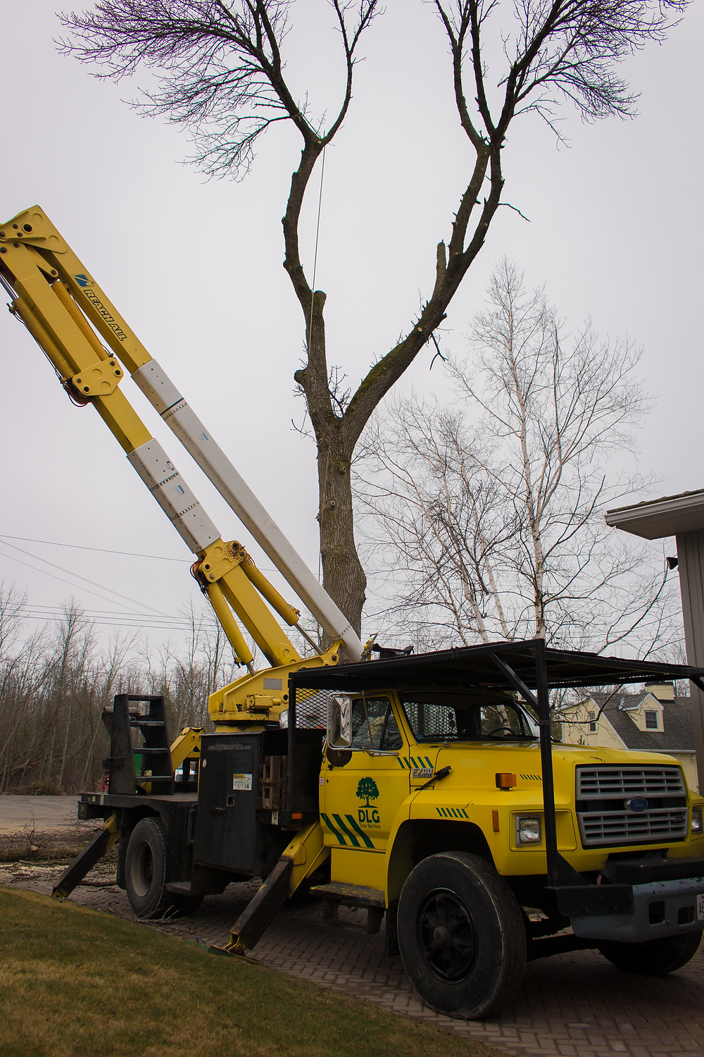 DLG crew removing ash tree on lilian cres. barrie.