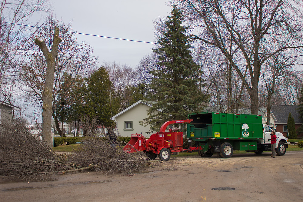 DLG Tree Service Barrie, tree removal Barrie.