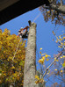 Wasaga Beach home owners and cottagers, spring is here. Call us for your tree service needs.