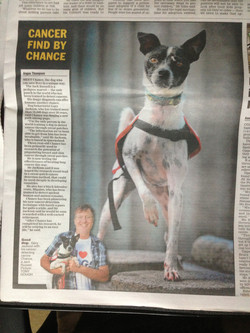 'Chance' the cancer detection dog