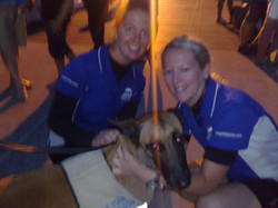 Nifty the cane toad detection dog