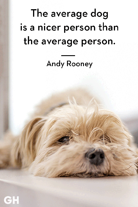 animal quote 3.png
