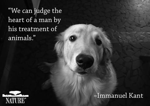 animal quote 6.jpg