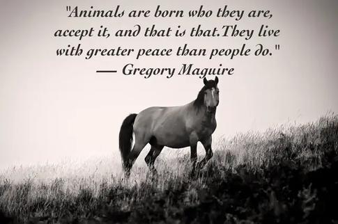 animal quote 2.webp