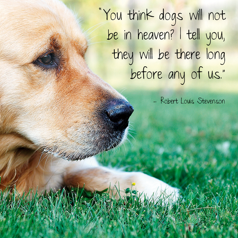 animal quote 14.png