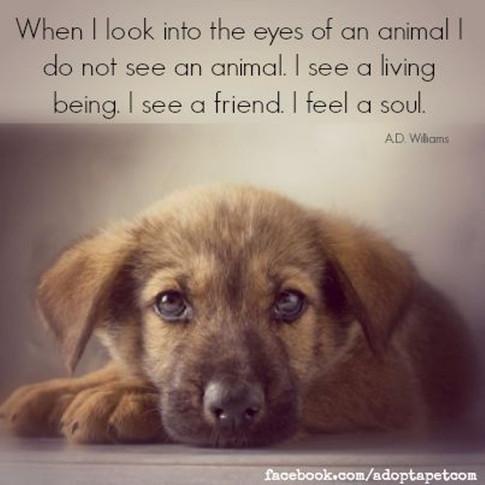 animal quote 1.jpg
