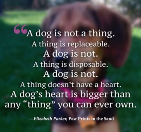 dog is not a thing.png