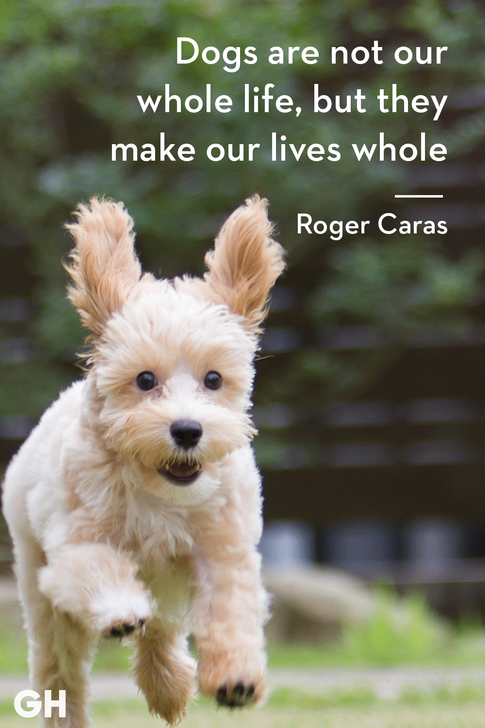 animal quote 7.png